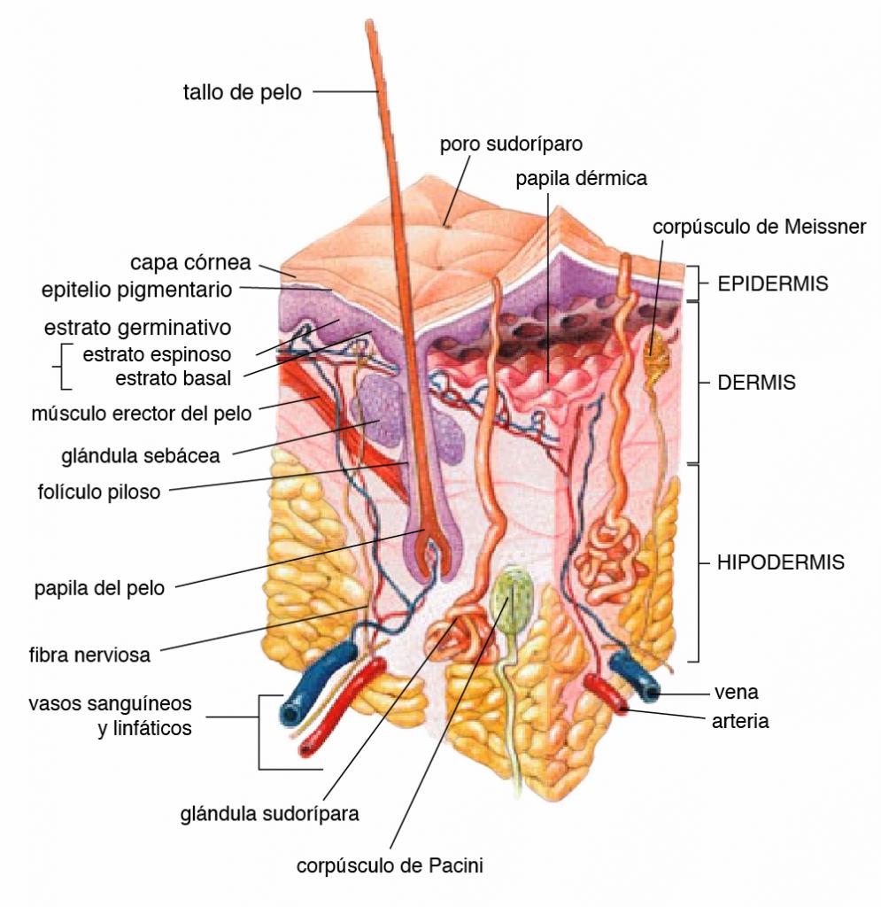 Información general cáncer de piel
